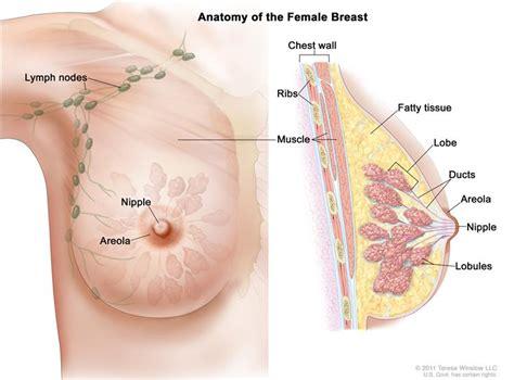 Breastfeeding with implants breastfeeding support jpg 750x554